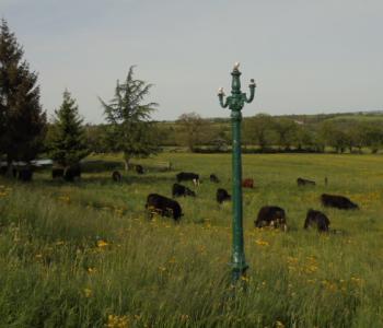 Vends un concept d'agro-tourisme sur 100 ha pour cause de retraite ; énorme potentiel. image 2